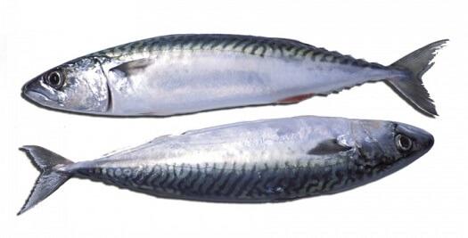 Lorimex riba